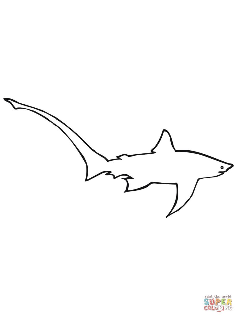 768x1024 Long Tailed Or Common Thresher Shark Design Coloring Page