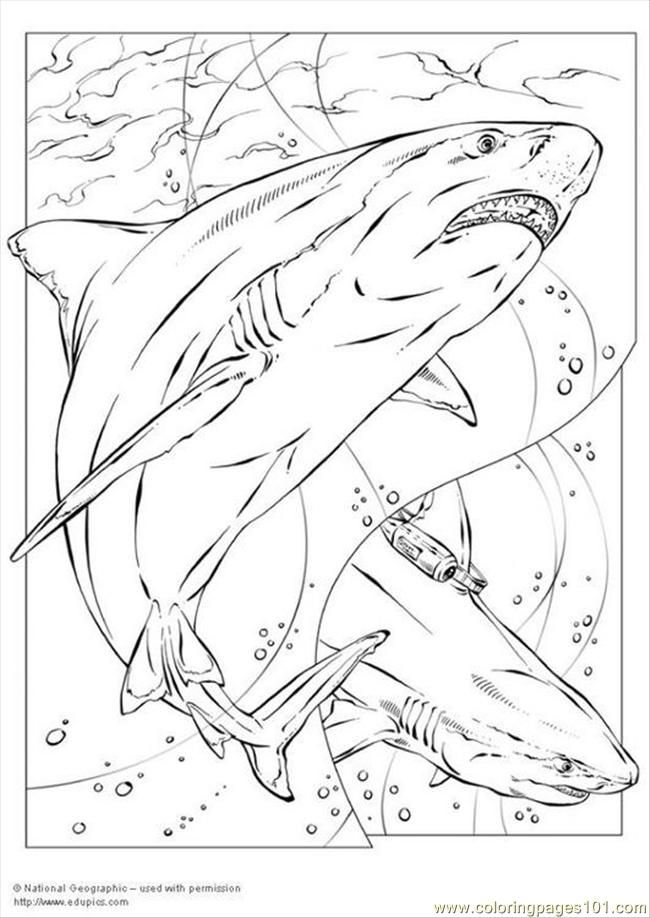 650x918 Best Shark Images On Shark Coloring Pages, Coloring