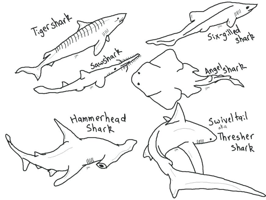 870x653 Shark Coloring Pages To Print Shark Coloring Pages To Print Meet