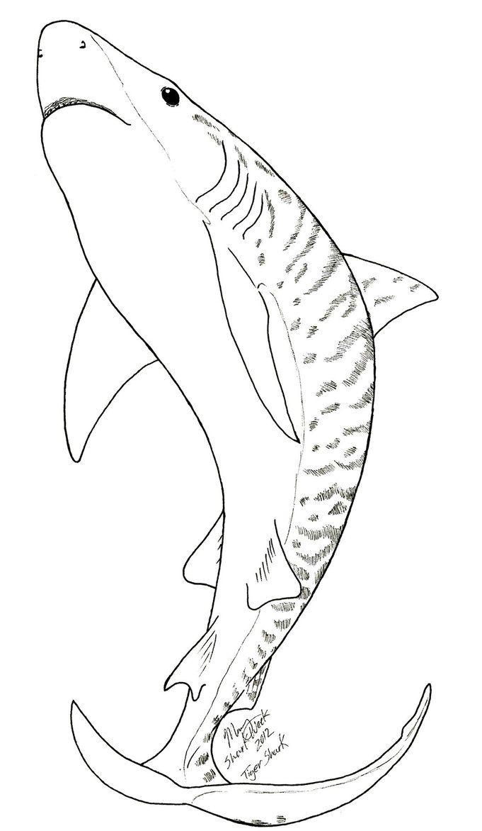 681x1172 Tiger Shark Coloring Page Coloring Pages Shark