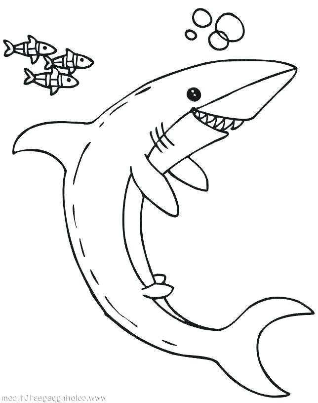 644x815 Megalodon Shark Coloring Pages