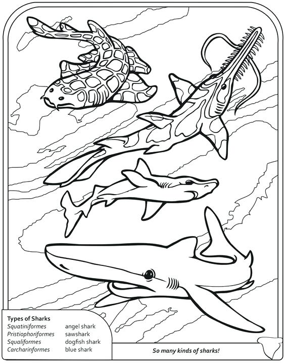 564x718 Coloring Pages Disney Channel Shark Thresher Page Sharks