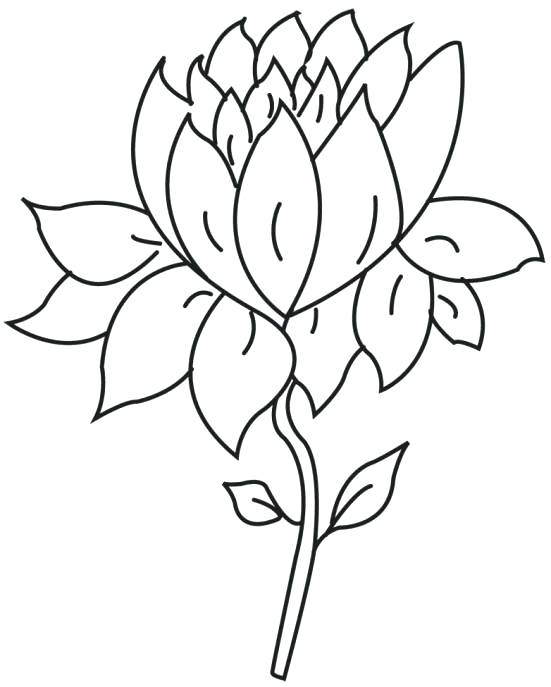 551x687 Lotus Outline Coloring Page Free Printable Coloring Pages Clip