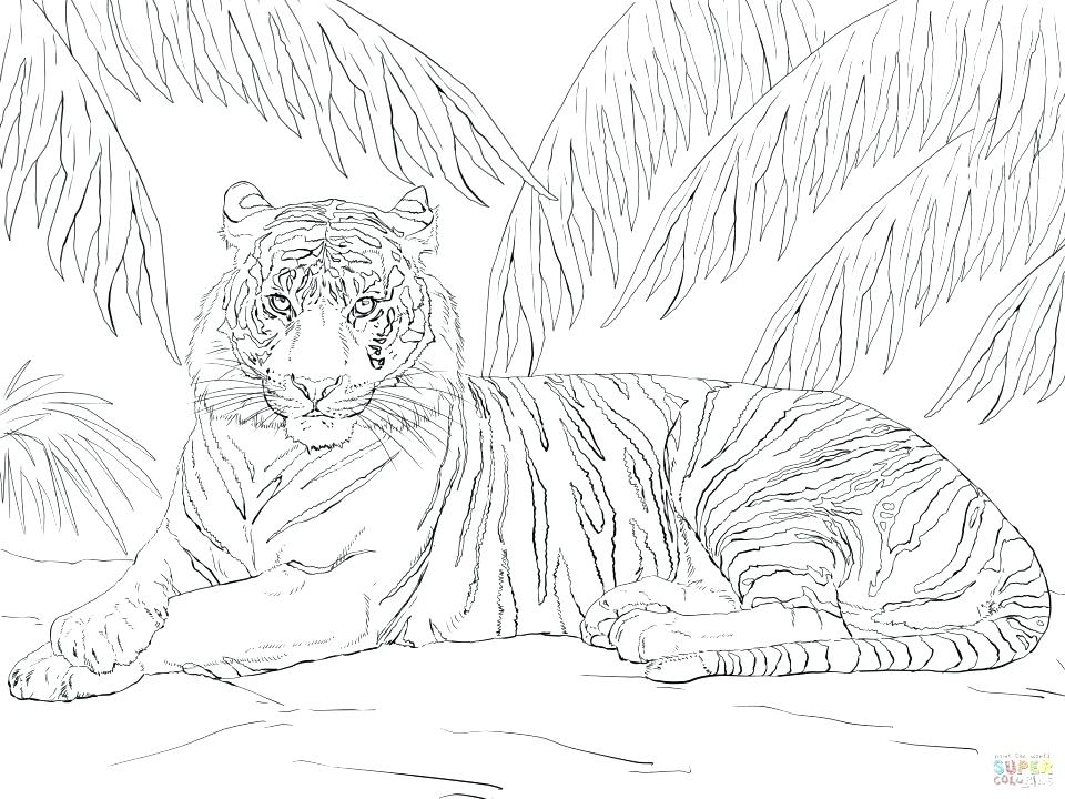 960x720 Coloring Pages Tiger Tiger Coloring Pages In Addition To Tiger