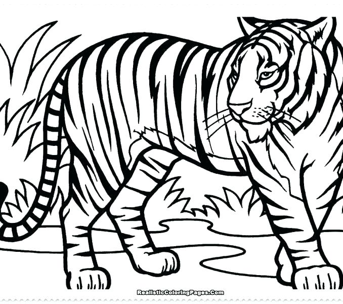 678x600 Coloring Pages Tiger Tooth Coloring Pages Coloring Pages Coloring