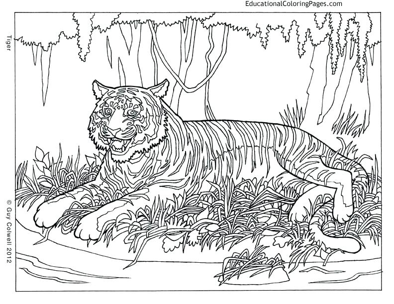 792x612 Cool Tiger Coloring Pages Or Cool Tiger Coloring Pages Super Hard