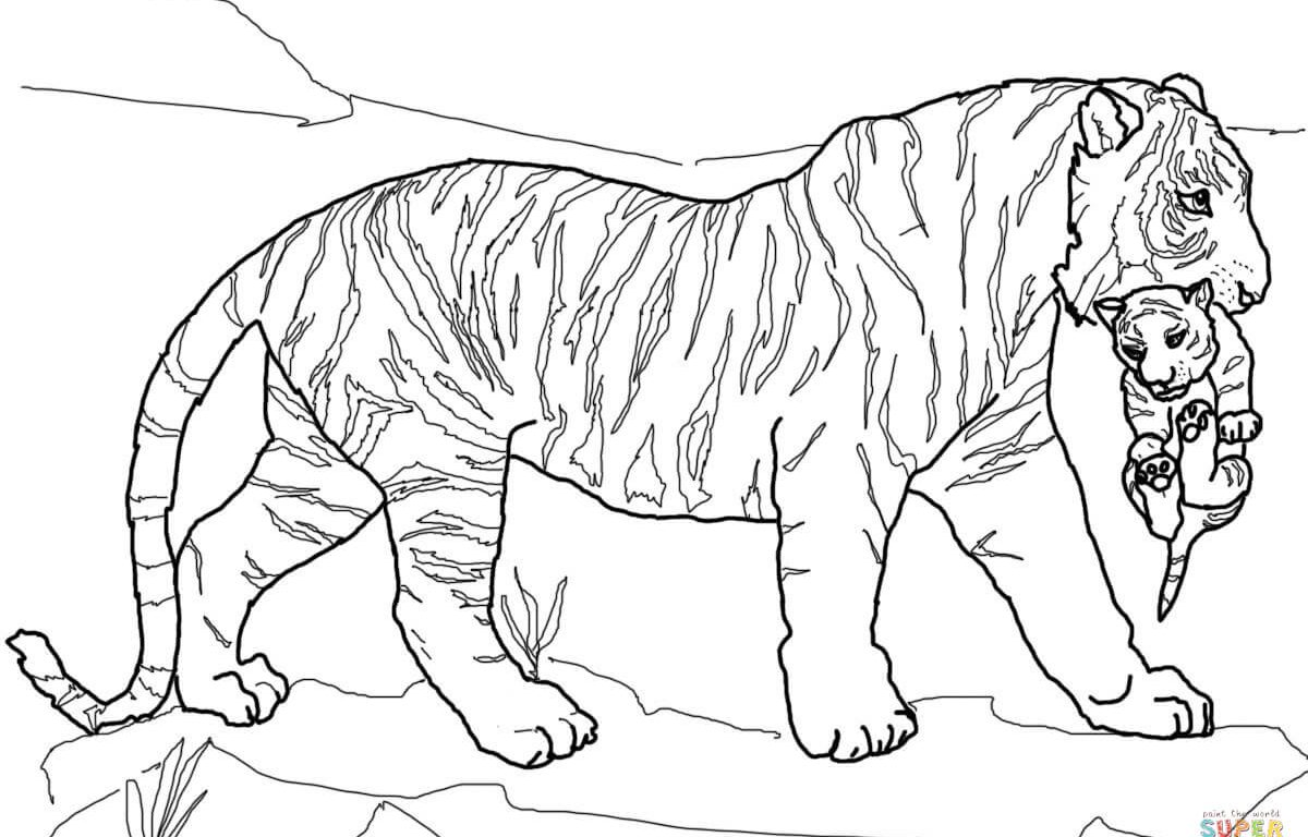 1200x768 Fancy Printable Tiger Coloring Pages Standing Bengal Page Free