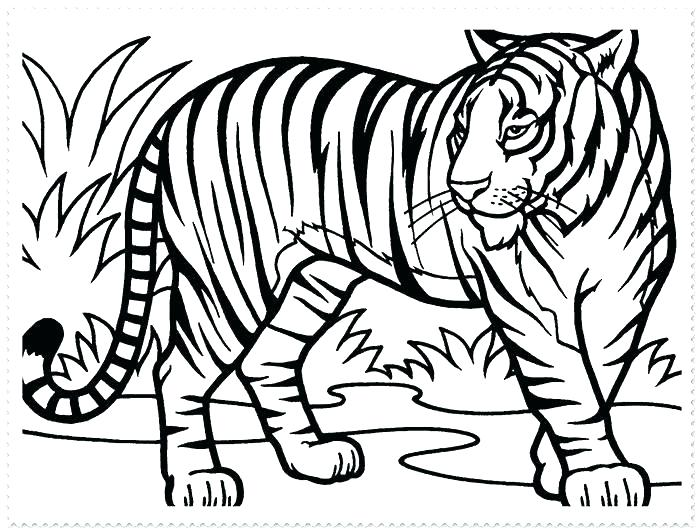 700x532 Free Tiger Coloring Pages Free Tiger Coloring Pages Tigers