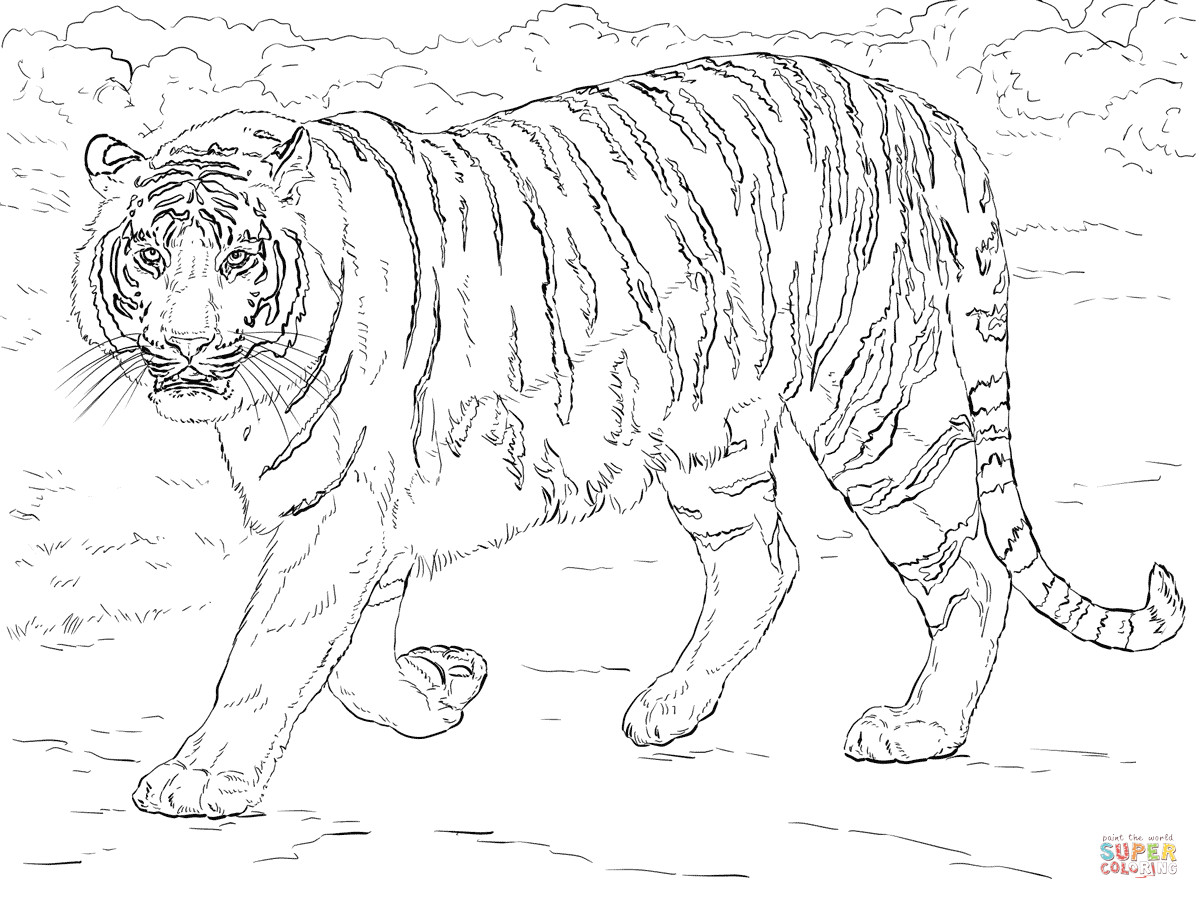 1199x899 Incredible Tiger Coloring Pages With Page Showy Adult Acpra