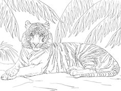 236x177 Realistic And Detailed Coloring Page Of Tiger For Older Kids