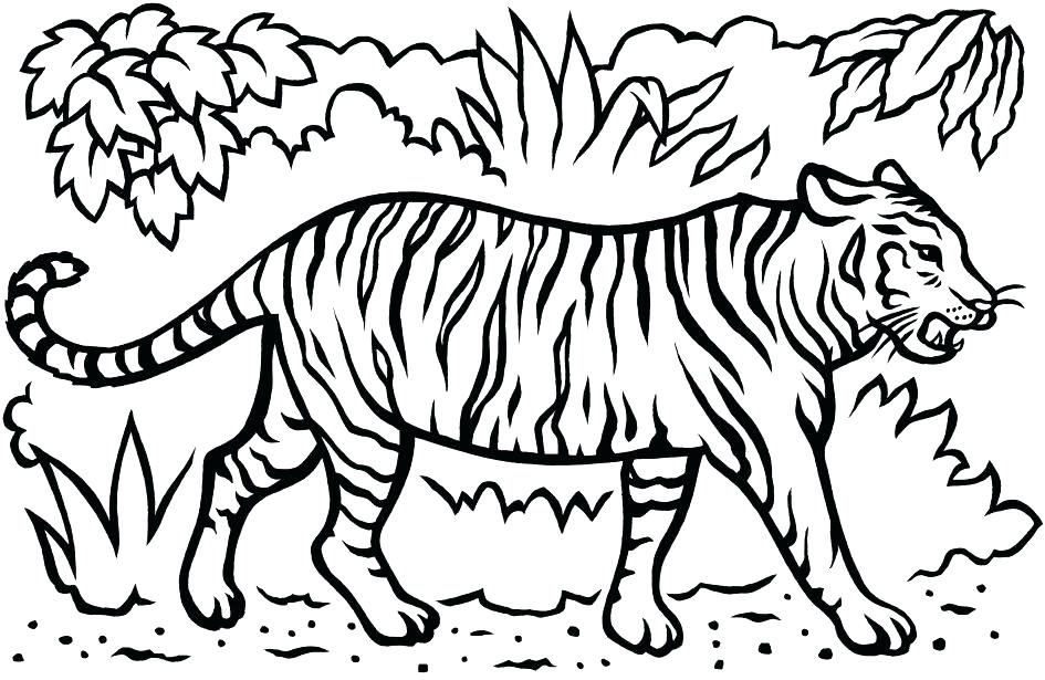 945x615 Tiger Coloring Page