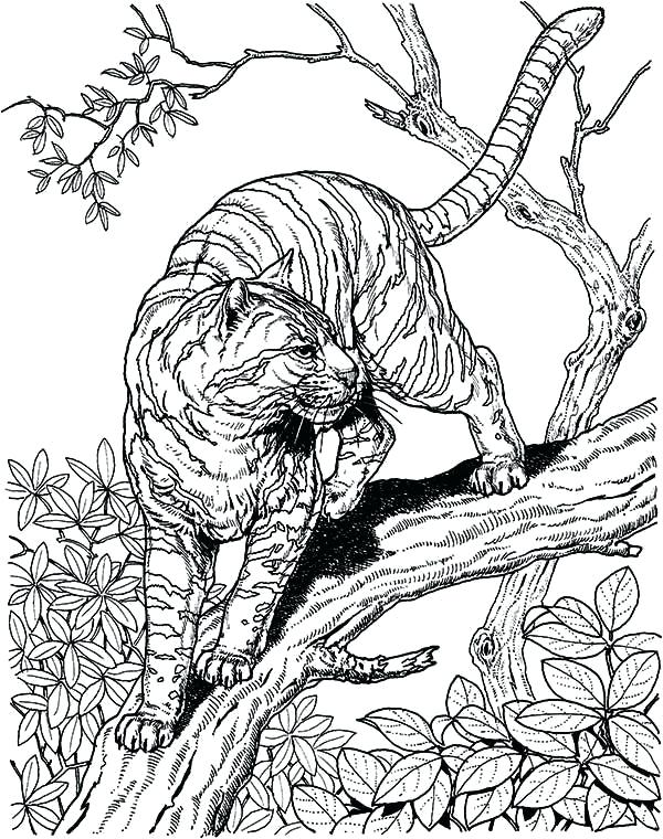 600x760 Tiger Coloring Pages Coloring Pages Tigers Coloring Picture