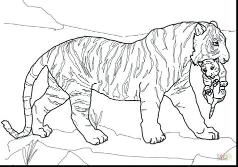 476x333 Tiger Coloring Pages Free Tiger Coloring Pages For Adults