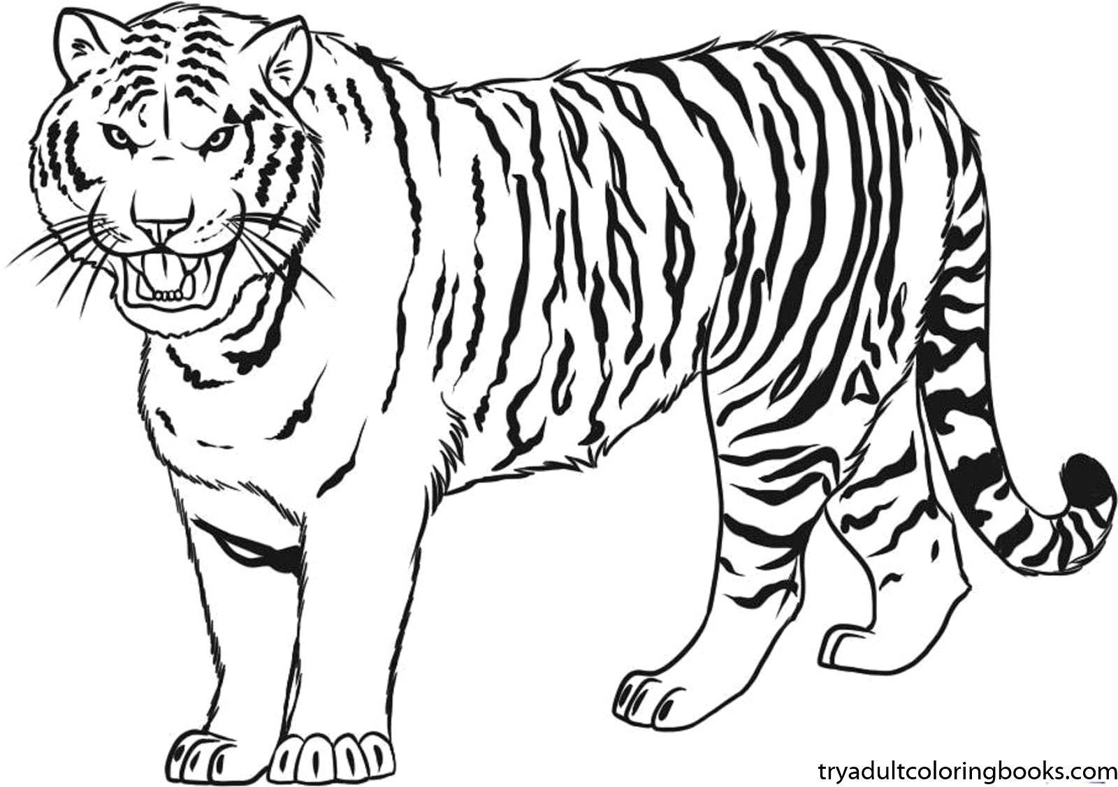 1600x1127 Tiger Coloring Pages Kiopad Fantastic Tigers Animals For Preschool