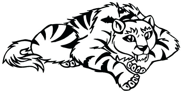 600x302 Tiger Coloring Pages Saber Tooth Tiger Coloring Pages Tiger