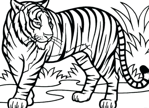 600x434 Baby Tiger Coloring Pages Large Size Of Tiger Coloring Pages