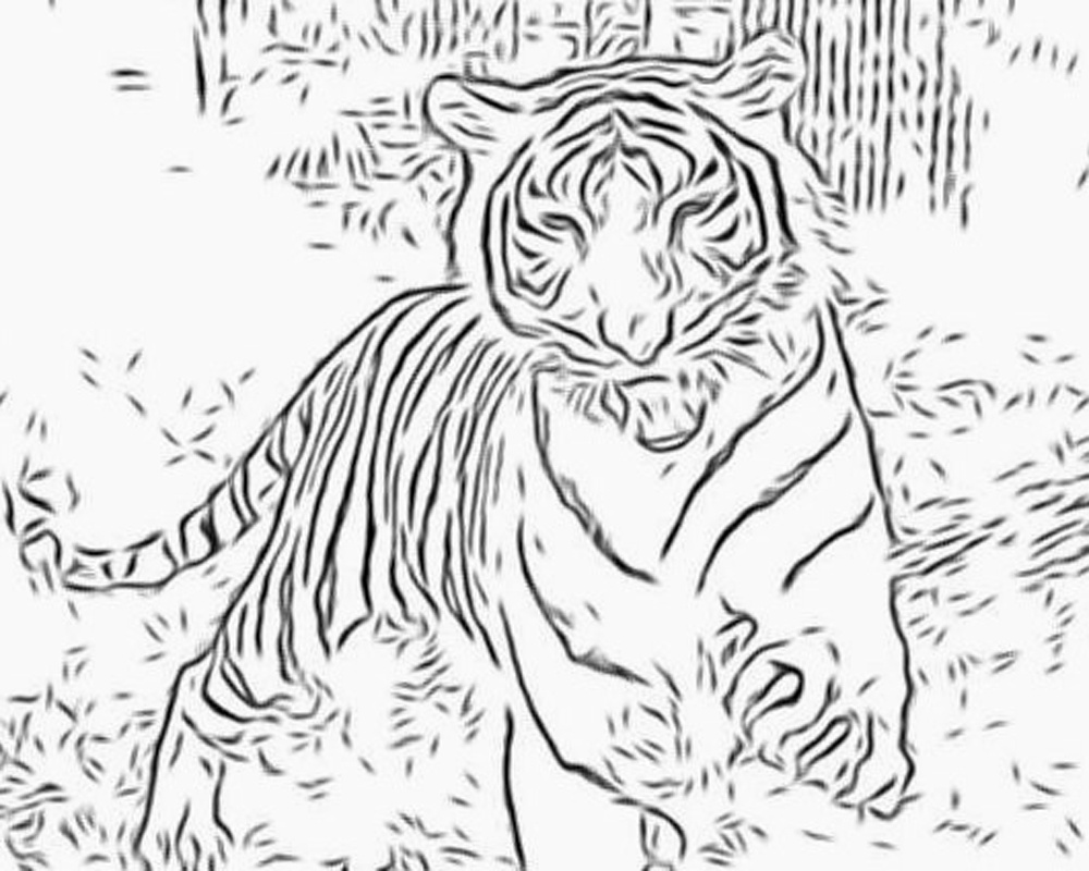 1000x800 Cartoon Running Tiger Coloring Pages Download Coloring Sheets