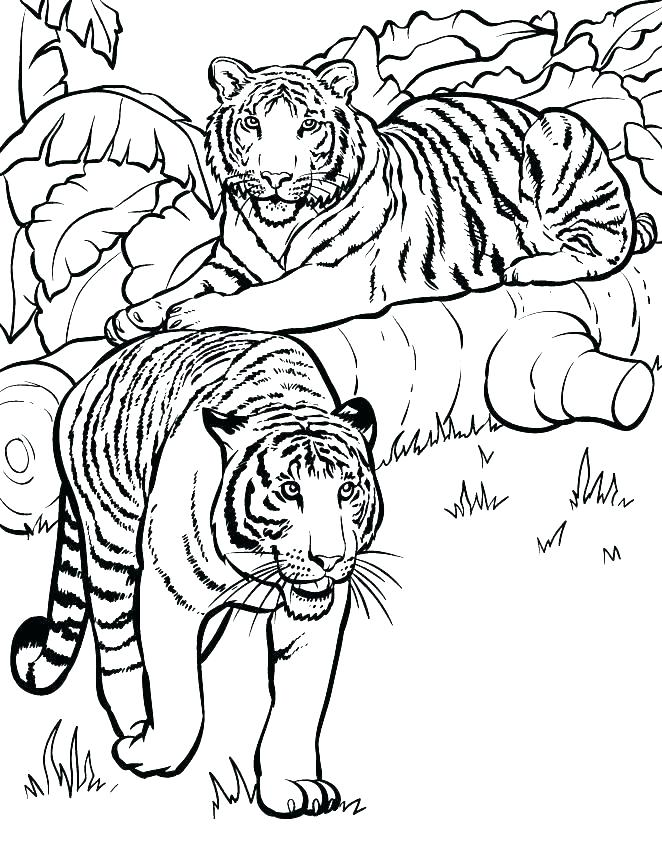 662x842 Coloring Page Saber Tooth Tiger Pages Of Tigers Printable For Kids