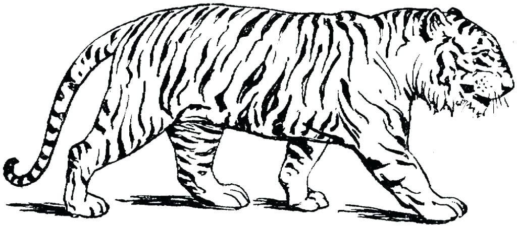 1024x451 Tiger Coloring Pages Coloring Book Tiger Pages Free At Tiger Info