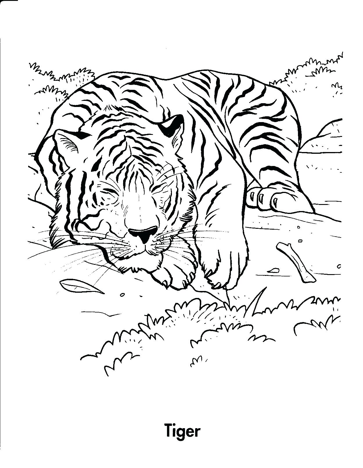 tiger coloring pages for preschool 37