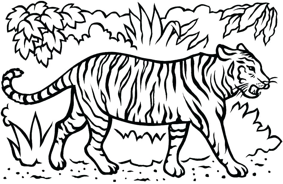 tiger coloring pages for preschool 6
