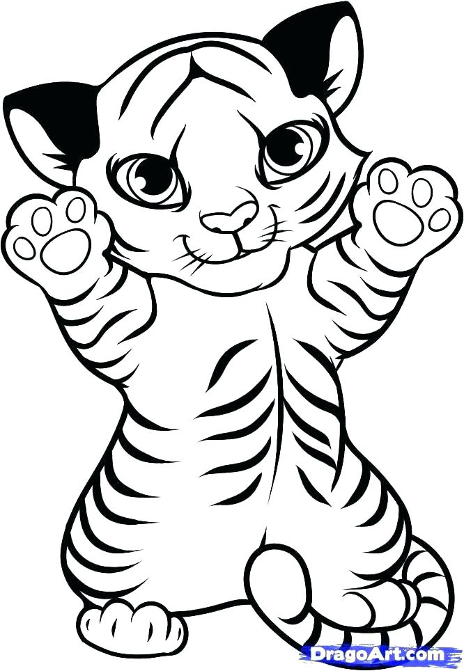 666x964 Coloring Pages Of Tigers Tiger Color Page Tiger Coloring Pages