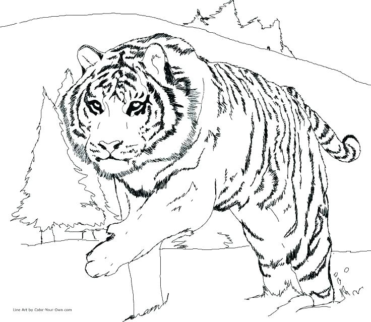 736x639 Cute Tiger Cub Coloring Pages Printable Coloring Leopard Coloring