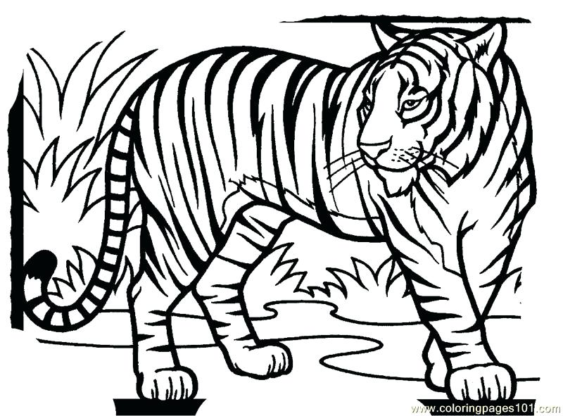 800x591 Free Tiger Coloring Pages Tiger New Coloring Page Free Tiger