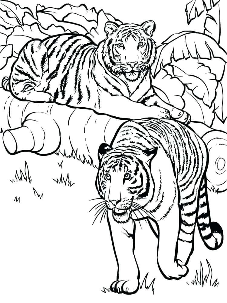 750x1000 Tiger Cub Coloring Pages Free Tiger Coloring Pages Coloring Pages
