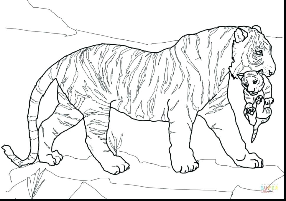 970x684 Tiger Cub Coloring Pages Tiger Coloring Pages Large Size