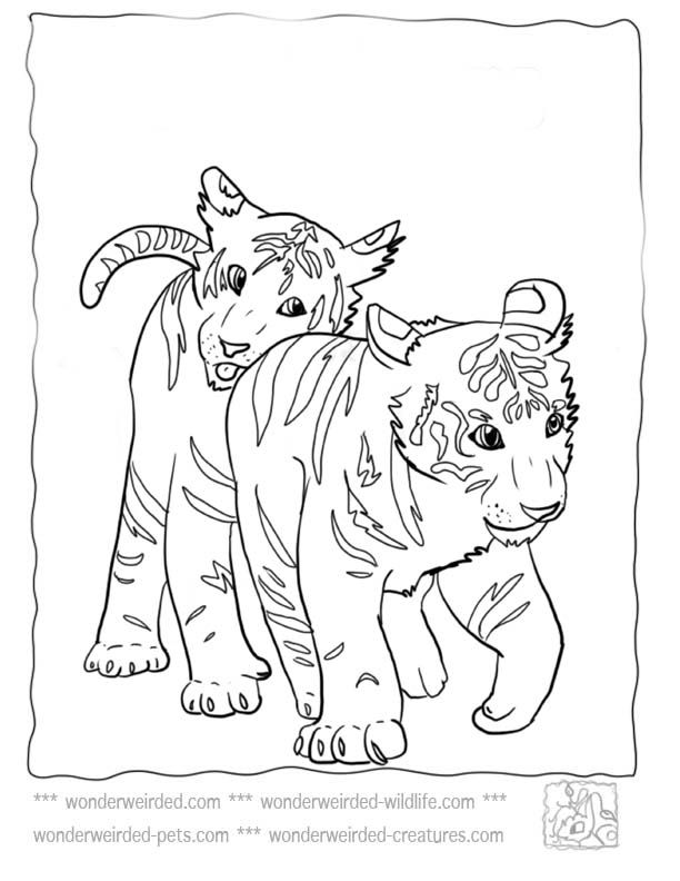 612x792 Baby Tiger Coloring Pages