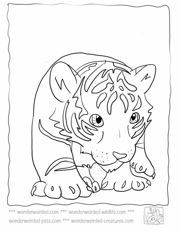 612x792 Baby Tiger Cub For Kindergarten Kids Coloring Page Colouring