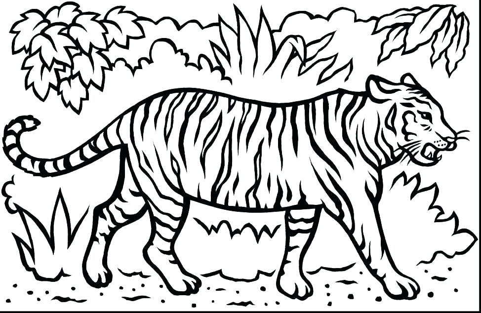 974x634 Printable Tiger Coloring Pages Tiger Face Coloring Page Tiger