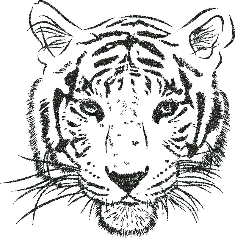 790x800 Coloring Page Tiger Face Tigers Pages Printable New Fuhrer