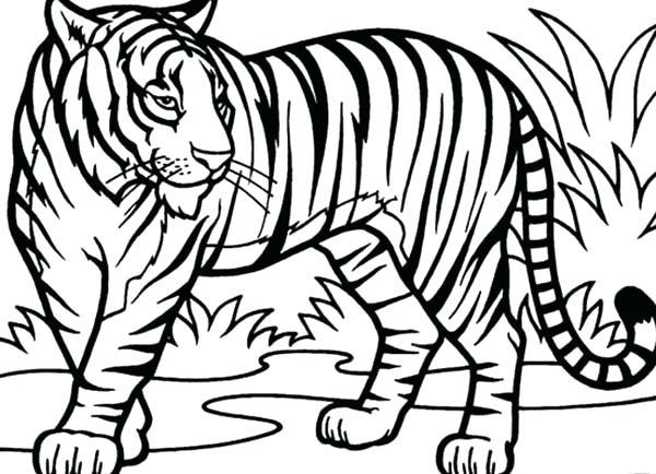 600x434 Tiger Coloring Sheet Tiger Coloring An Illustration Of Tiger