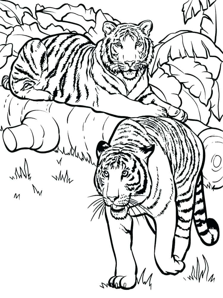 750x1000 Tiger Cub Coloring Pages Tiger Head Coloring Page Tiger Coloring