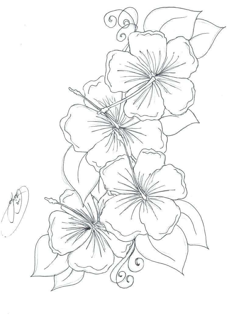 762x1049 New Tiger Lily Flower Coloring Pages Collection Printable