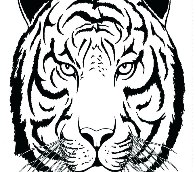 678x600 Tiger Coloring Page Or Tiger Coloring Page Tiger Lily Coloring