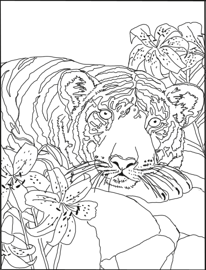 800x1050 Tiger And Lily Coloring Pages To Print