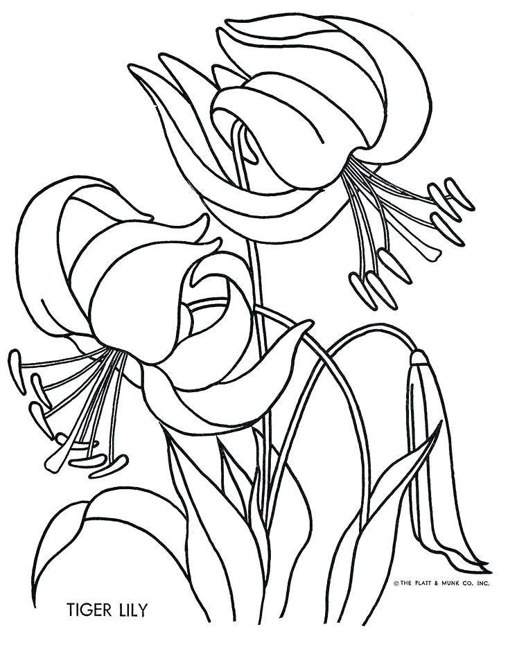 733x931 Lily Coloring Pages