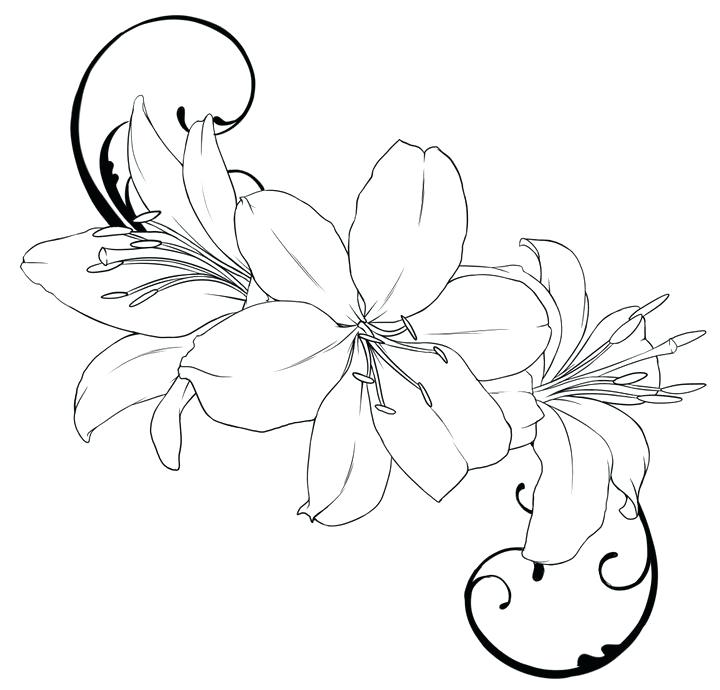 720x690 Lily Flower Coloring Pages