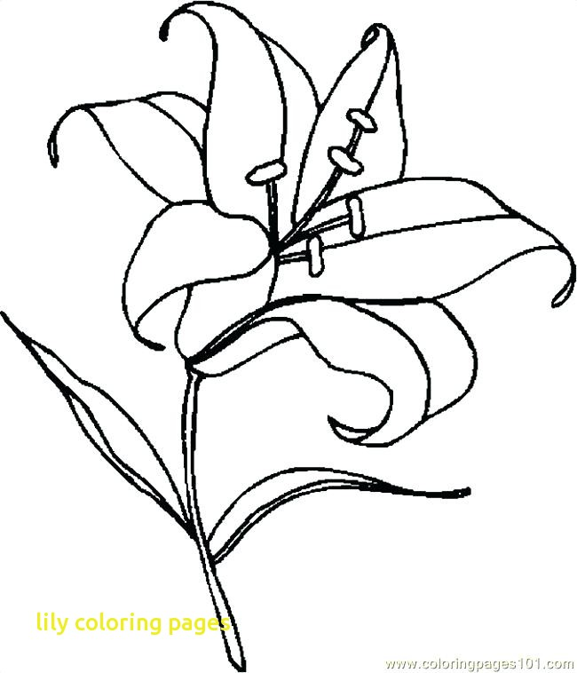 650x758 Lily Coloring Pages