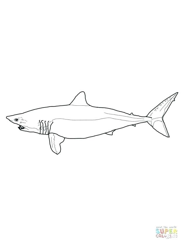 618x824 Coloring Surprising Tiger Shark Coloring Page Tiger Shark Click