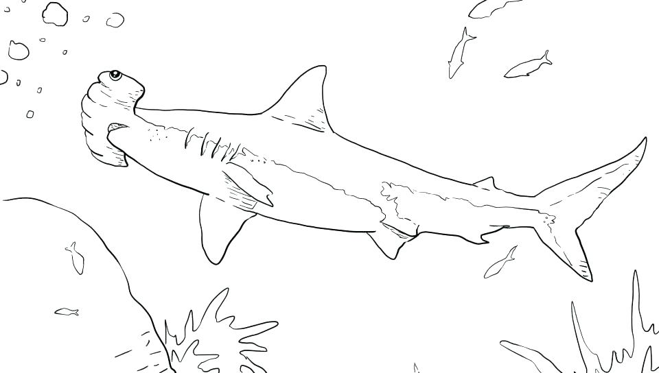 960x544 Shark Color Pages Free Scary Shark Coloring Pages Scary Shark