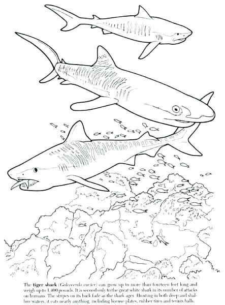 443x600 Tiger Shark Coloring Page Shark Coloring Hammerhead Shark Coloring
