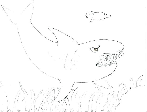 618x474 Whale Shark Coloring Pages Tiger Shark Coloring Page Whale Shark
