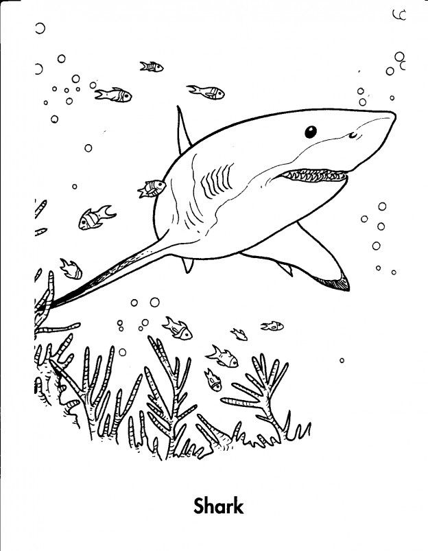 624x803 Free Printable Shark Coloring Pages For Kids Shark, Tigers