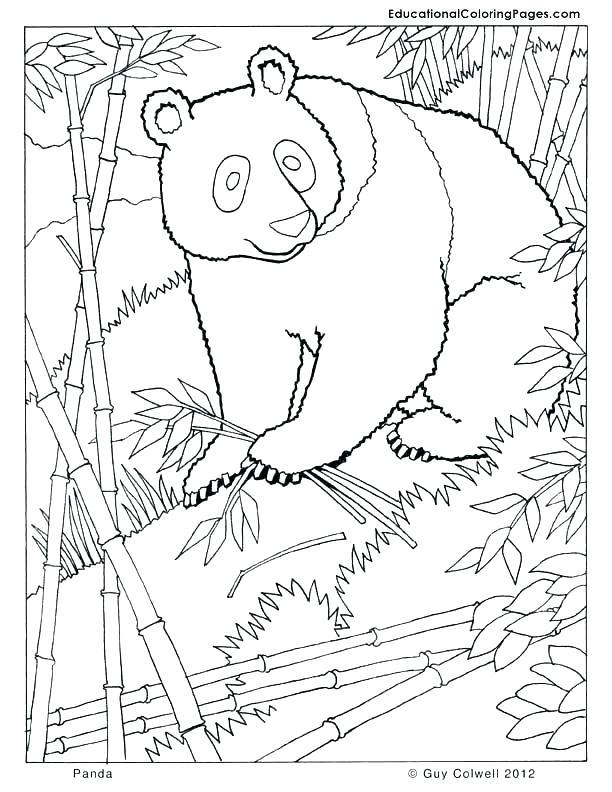 612x792 Panda Coloring Page Master Tigress Coloring Page Kung Fu Panda