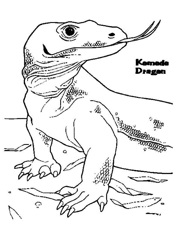 600x847 Komodo Dragon Siniffing With His Tongue Coloring Pages