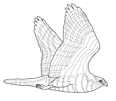 480x418 Hawk Coloring Pages Red Tailed Hawk Coloring Page Hawk Coloring